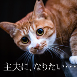 cat_eyecatch