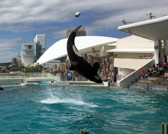 kamogawa-seaworld-killer-whale-main