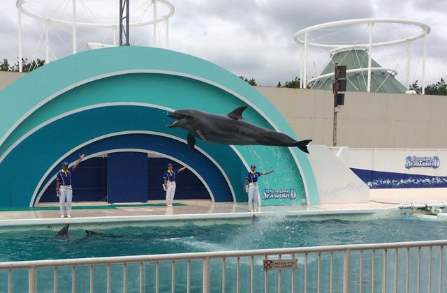 kamogawa-seaworld-dolphin-jump