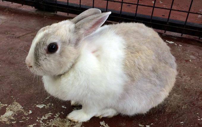 那須ワールドモンキーパーク ウサギ