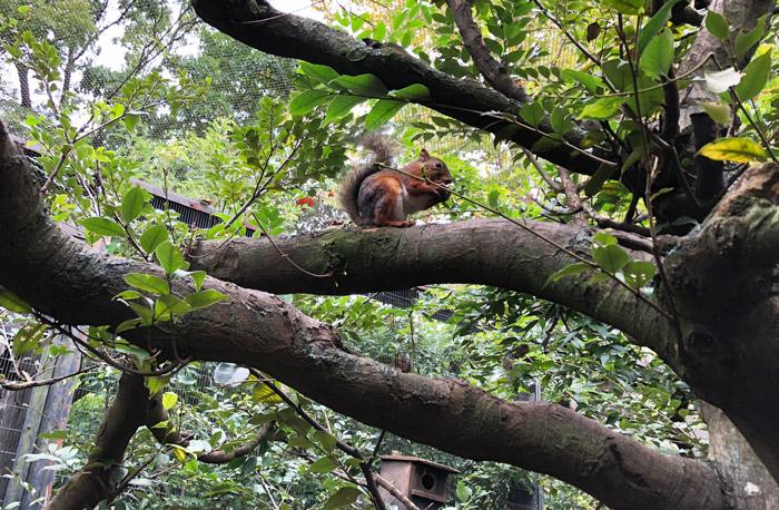 木の枝で食事中のリス