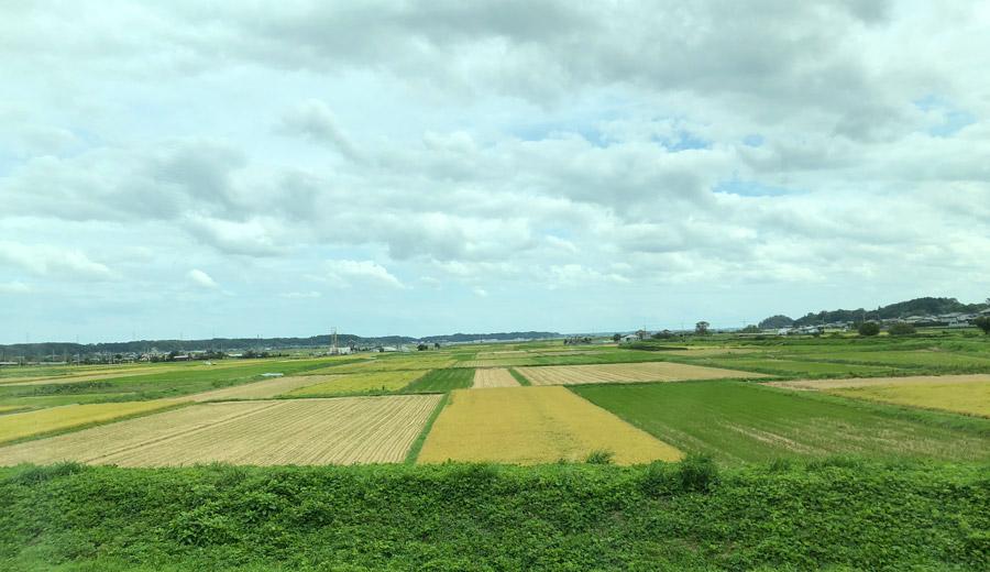 特急ひたちからの車窓 田園風景